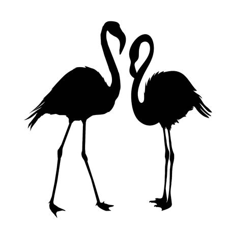 Flamingo silhouette, vector, illustration, wild, isolated, wildlife, background, set tropical beak black collection design element feather leg nature zoo beauty Stock Photo