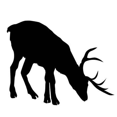 아름 다운 귀족 자랑 스 러 워 sika 사슴 Cervidae 가족에 반추 동물 포유 동물입니다. 측면보기. 어두운 잉크 손으로 그려진 된 그림 미술 스케치에서 복고 일러스트