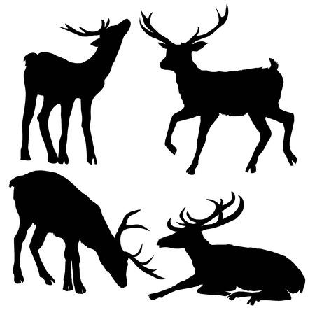 아름 다운 귀족 자랑 스 러 워 sika 사슴 Cervidae 가족에 반추 동물 포유 동물입니다. 텍스트, 실루엣, 사슴, 벡터, 장식용, 머리, 그림, 큰, 동물, 검정, 자