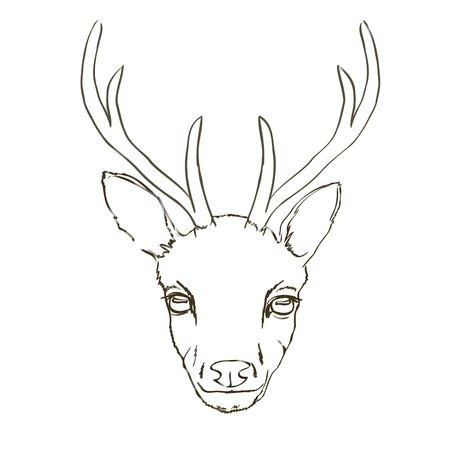 Deer sketch, animal, vector, illustration,