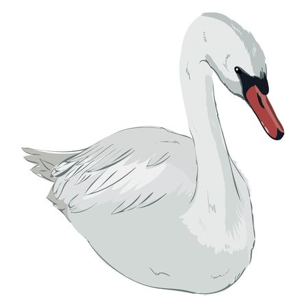 cute lovely princess swan, vector, illustration