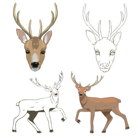 Deer sketch, set, vector, illustration