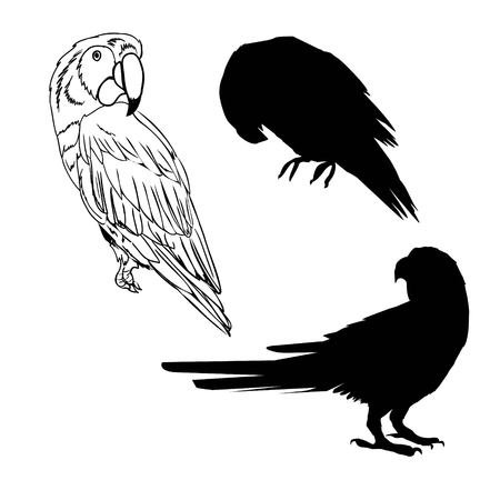 illustration with parrot silhouettes collection isolated on white background Stock Photo