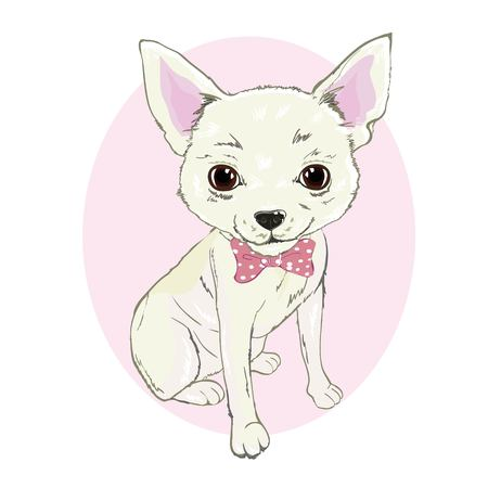 Girl Chihuahua illustration print. Cute fashionable dog vector sketch.