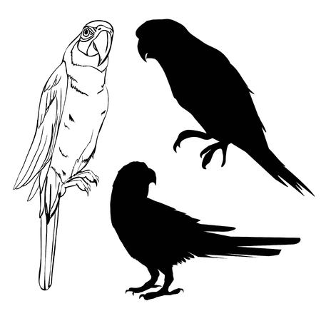 illustration with parrot silhouettes collection isolated on white background Banco de Imagens