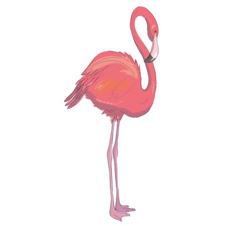 Vector, flamingo, bird, isolated, pink, beach, beak, cute Exotic bird Cool flamingo decorative flat design element Lovely flamingo