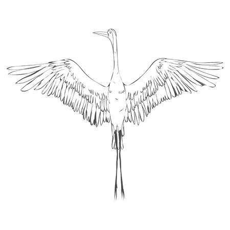 Vector of illustrations bird crane. White stork . isolated object Banco de Imagens