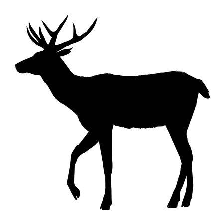 deer, silhouette vector head forest illustration, decoration, elegance, horned, object, shadow, buck doe big vintage cervus cute dappled engraving graceful