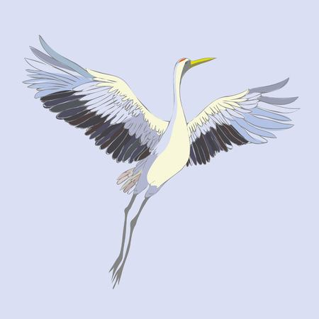 Vector of illustrations bird crane. White stork . isolated object Stock Photo