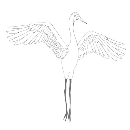 Vector of illustrations bird crane. White stork . isolated object Stock Photo