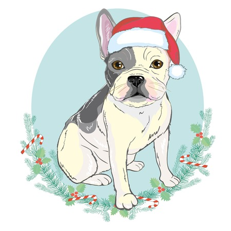 Portrait of cute french bulldog in red christmas hat on blue background. Banco de Imagens
