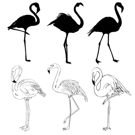 Illustration with a set of flamingos silhouettes isolated on white background