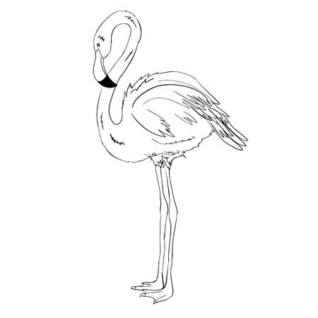Flamingo vector illustration. Doodle style. Isolated on white background.