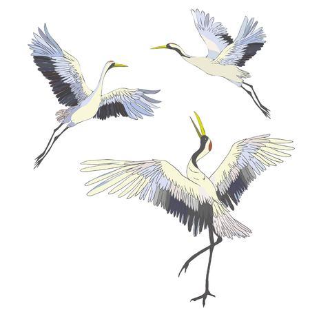 Crane vector illustration set