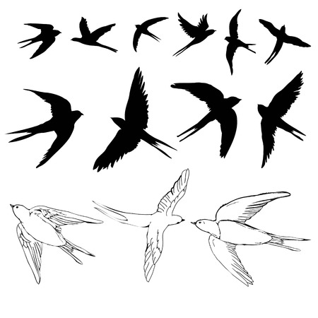 swallow sketch and silhouette, set, vector illustration