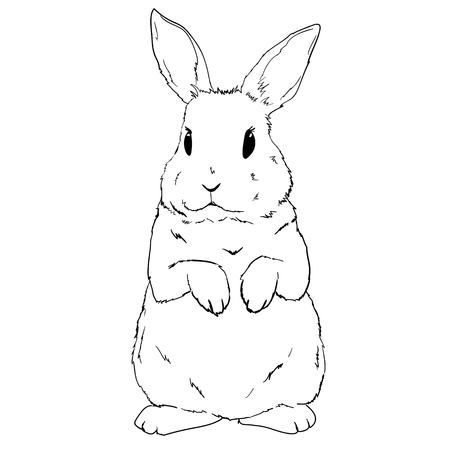 Rabbit sketch and silhouette, vector, illustration bunny black