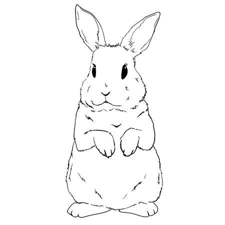 Schizzo di coniglio e silhouette, vettore, illustrazione coniglietto nero Vettoriali