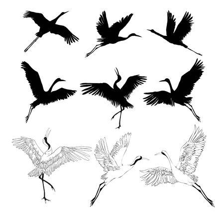 kraan schets, vogel vliegen over witte achtergrond, set, silhouet, vectorillustratie
