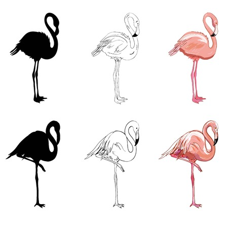 Hand drawing flamingos. Vector illustration, animal, bird isolated drawing pink