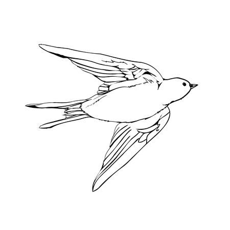 Swallows, vector drawing of a series of monochrome sketches