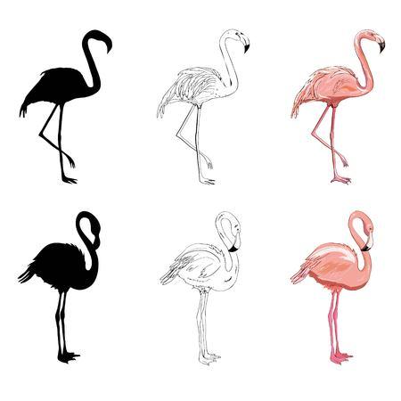 Hand drawing flamingos. Vector illustration, animal, bird isolated drawing pink