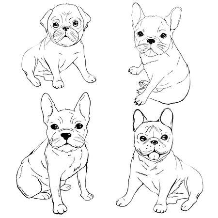 Englische Bulldogge. Französische Bulldogge. Hund auf weißem Hintergrund. Vektorhundeillustration Vektorgrafik