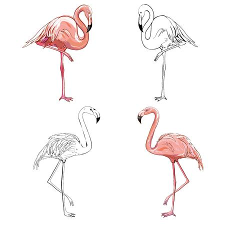 Hand drawing flamingos. Vector illustration, animal, bird isolated drawing pink Фото со стока - 100785878