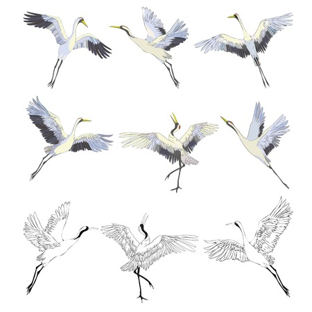 crane sketch, bird flying over white background, set, silhouette, vector illustration