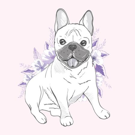 French bulldog, sitting in front of pink background