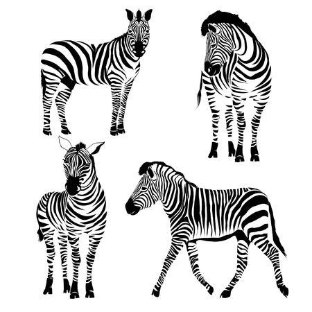 Logo z głową zebry.