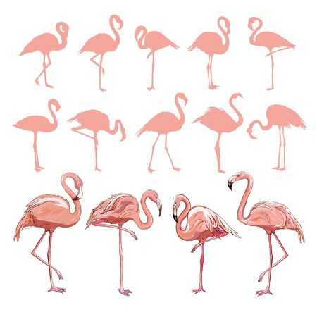 Pink flamingo silhouette, illustration, bird set vector