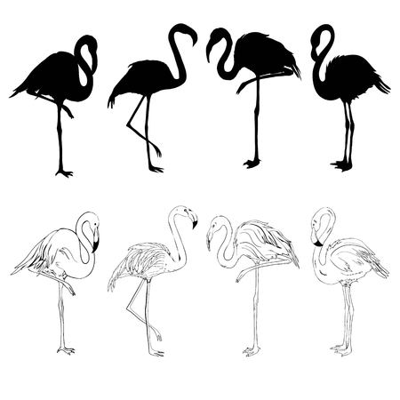 Pink flamingo silhouette, illustration, bird set vector