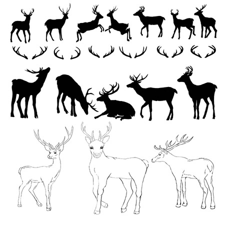 deer silhouette and sketch, vector, illustration, animals, set on white background, animals image Archivio Fotografico - 112242381
