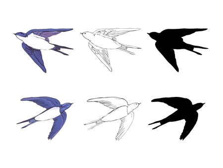 set of the swallow icons. Design elements for poster, t-shirt. Vector illustration. Illustration
