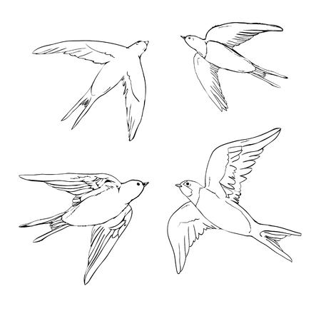 set of the swallow icons. Design elements for poster, t-shirt. Vector illustration. Stock Illustratie