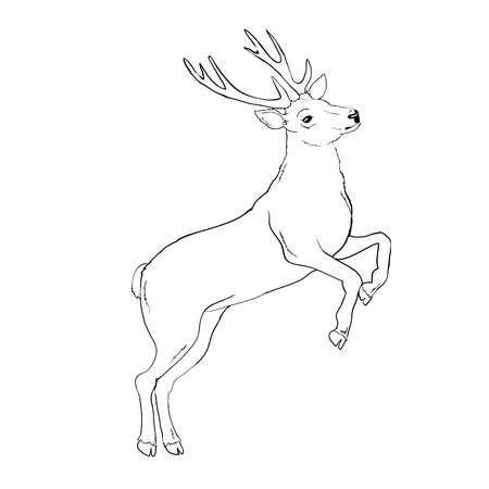 deer silhouette and sketch, vector, illustration, animals on white background