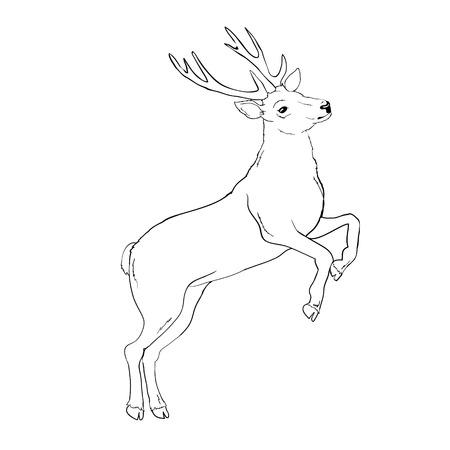 silhouette de cerf et croquis, vecteur, illustration, animaux sur fond blanc