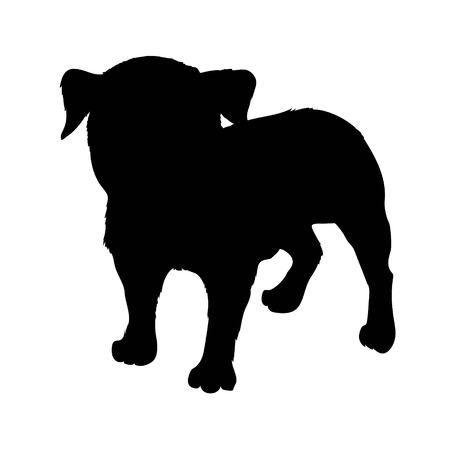 Pug purebred dog - vector silhouette isolated