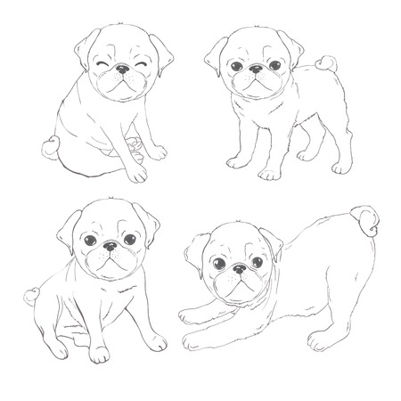 Set of vector images of pug. Isolated objects on a white background.