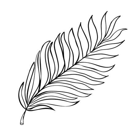 sketch of tropical leaves of hand drawn vector illustrations on white background
