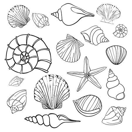 Illustrations vectorielles dessinées à la main - collection de coquillages. Ensemble marin.
