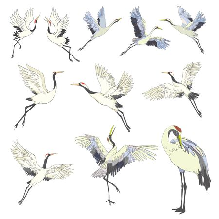 Crane, illustration, bird in flight Design element Vector