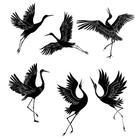 Sketch and silhouette or shadow black ink icons of crane birds or herons flying and standing set.