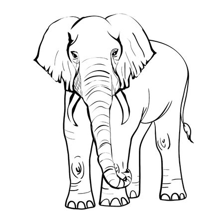 hand drawn sketch of asian elephant illustration done in black ink and isolated on white background Illusztráció