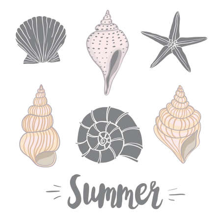 Hand drawn vector illustrations - collection of seashells. Marine set.