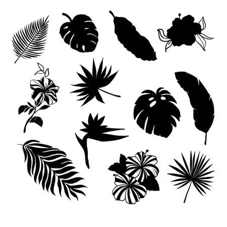 Tropical Leaves Silhouette Set with some flowers in black color as Banana Palm, Monstera, Fern, Bird of Paradise, Plumeria, Heliconia, Hibiskus.