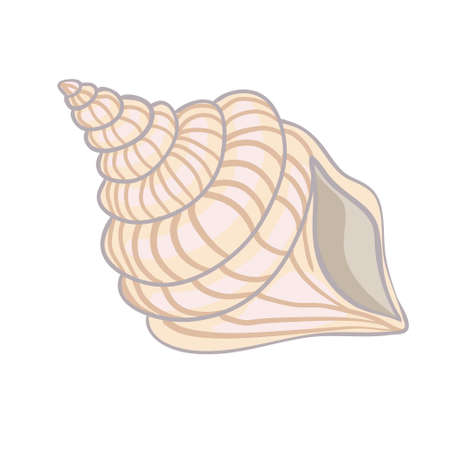 Textured vector illustration of an isolated peach seashell. Illustration