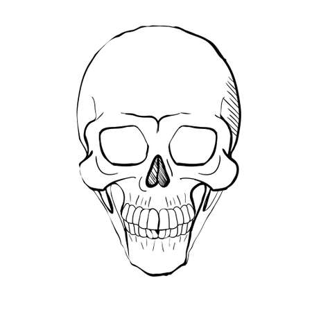 Hand drawn line art anatomically correct human skull isolated. Black and white vector illustration Vektorgrafik