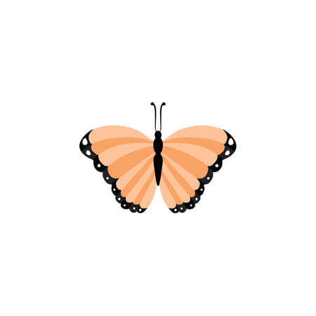 butterfly icon - Colorful Butterfly isolated, Beautiful Butterfly illustration Illustration