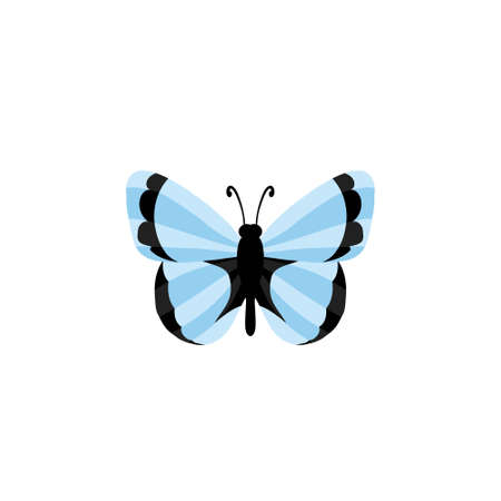 butterfly icon - Colorful Butterfly  isolated, Beautiful Butterfly illustration